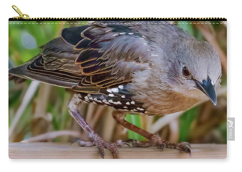 Bird Carry-all Pouch featuring the photograph Angry Bird by Joel Friedman