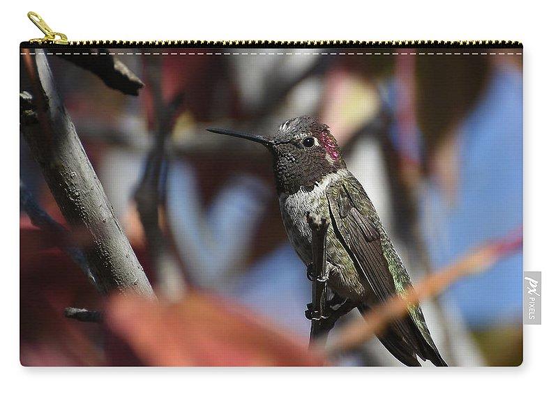 Anna's Hummingbird Carry-all Pouch featuring the photograph Anna In Autumn by Fraida Gutovich