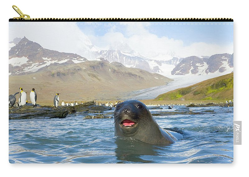 Allardyce Range Carry-all Pouch featuring the photograph Antarctic Fur Seal In Sea, King by Eastcott Momatiuk
