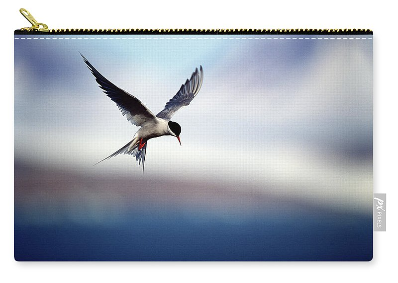Svalbard Islands Carry-all Pouch featuring the photograph Arctic Tern Hovering by Mike Hill