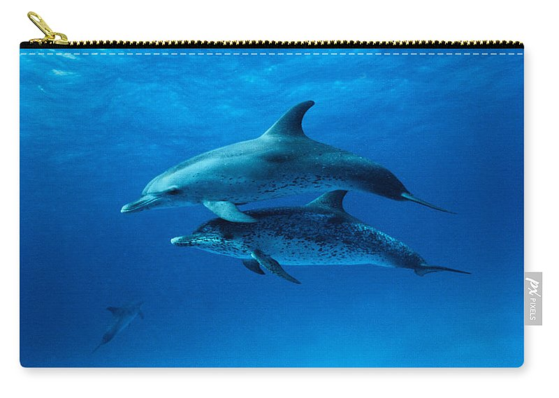 Color Image Carry-all Pouch featuring the photograph Atlantic Spotted Dolphins,stenella by Gerard Soury