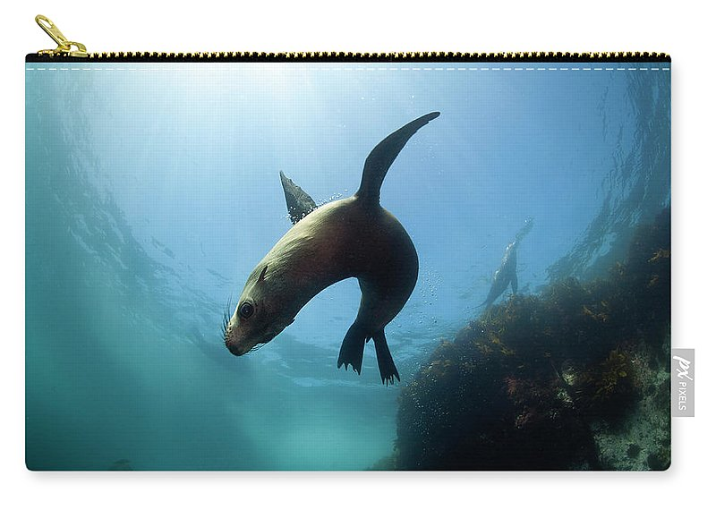 Underwater Carry-all Pouch featuring the photograph Australian Fur Seal With Sun Burst by Alastair Pollock Photography