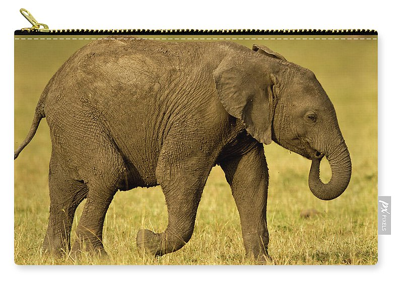 Following Carry-all Pouch featuring the photograph Baby Elephant Following The Herd On The by Manoj Shah