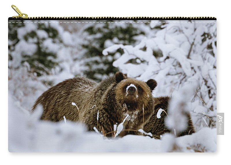 Grand Teton National Park Carry-all Pouch featuring the photograph Bear In The Snow by Catherine Avilez