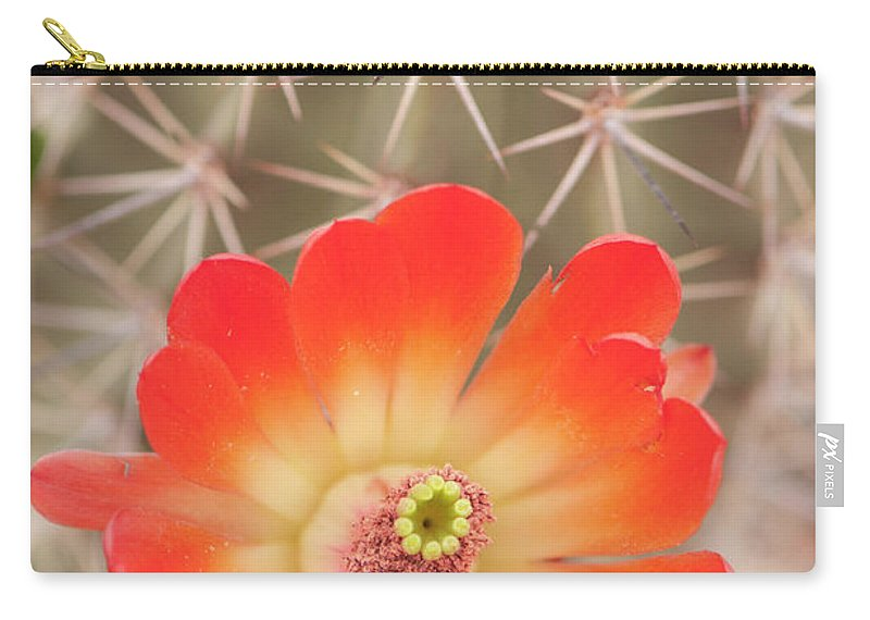 Orange Color Carry-all Pouch featuring the photograph Beautiful Claret Cup Hedgehog Blossoms by Lokibaho