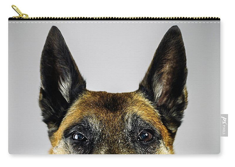 Pets Carry-all Pouch featuring the photograph Belgian Sheperd Malinois Dog Looking At by Joan Vicent Cantó Roig