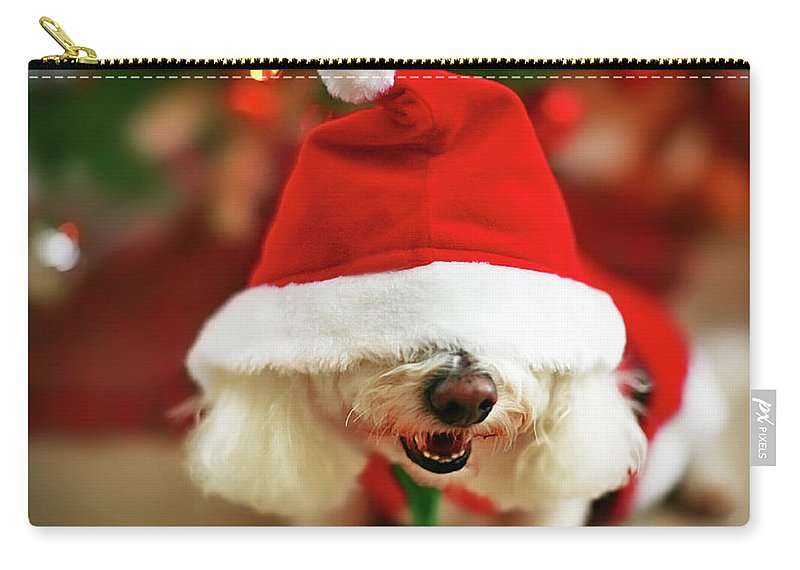 Pets Carry-all Pouch featuring the photograph Bichon Frise Dog In Santa Hat At by Nicole Kucera