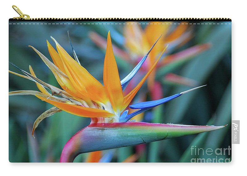 Flowers Carry-all Pouch featuring the photograph Bird Of Paradise Flowers by D Davila