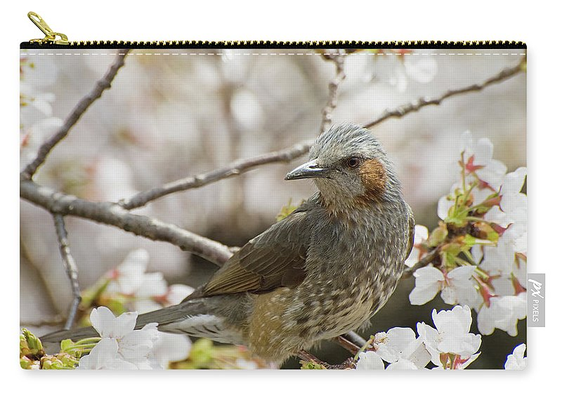 Alertness Carry-all Pouch featuring the photograph Bird Perched Among Cherry Blossoms by Philippe Widling / Design Pics
