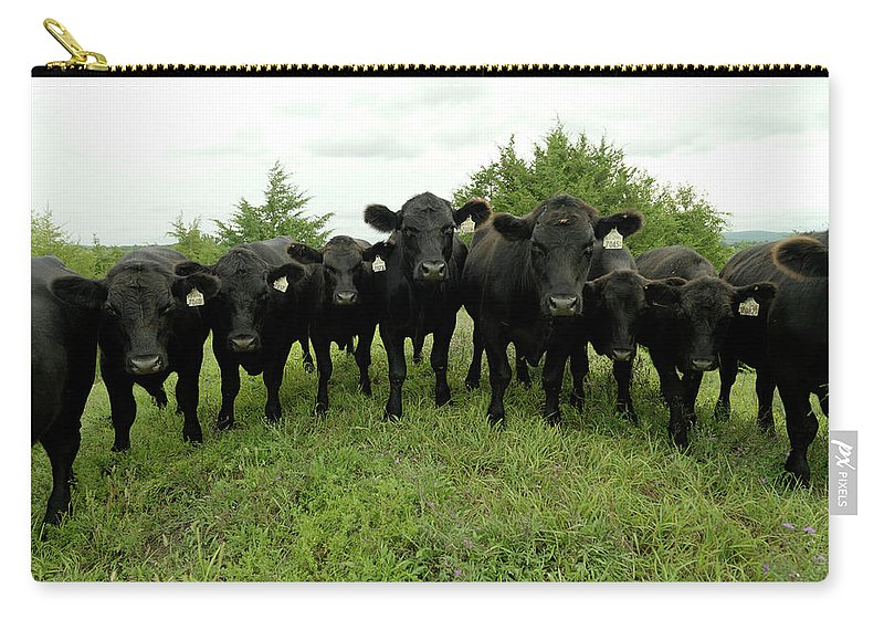 Grass Carry-all Pouch featuring the photograph Black Angus Cows by Xpacifica