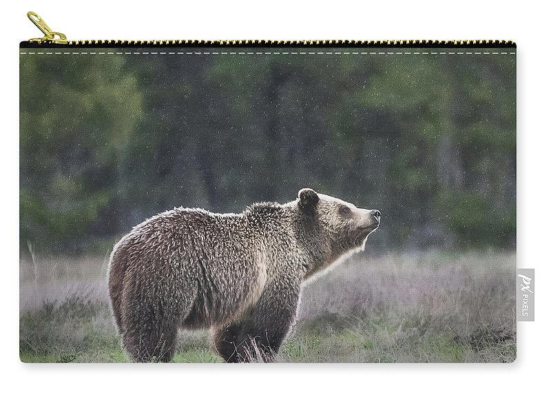 Cleveland Carry-all Pouch featuring the photograph Blondie The Bear by Matt Shiffler