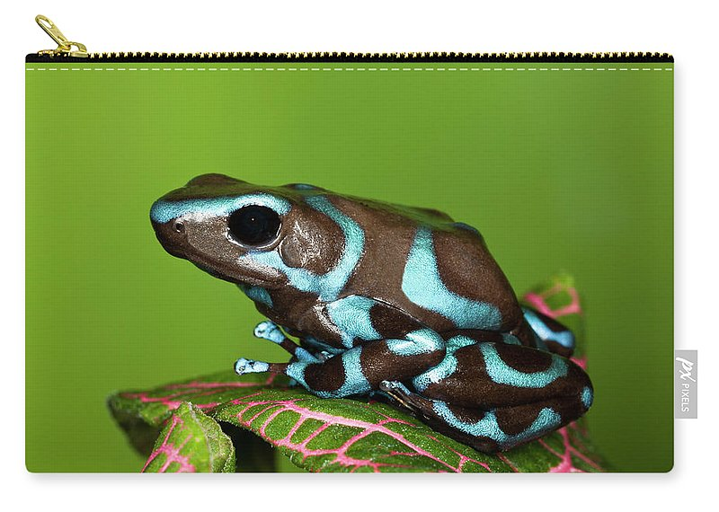 Animal Themes Carry-all Pouch featuring the photograph Blue And Black Dart Frog, Dendrobates by Adam Jones