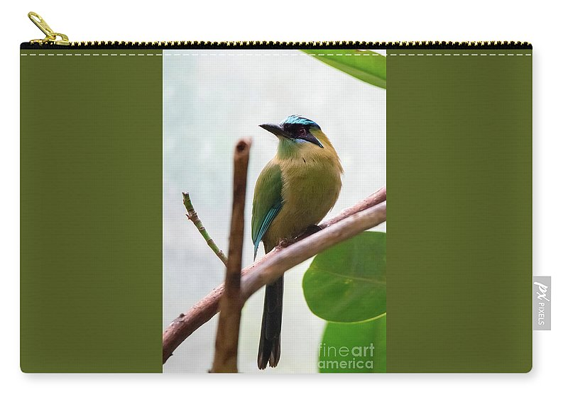 Blue Carry-all Pouch featuring the photograph Blue-crowned Motmot by Ed Taylor