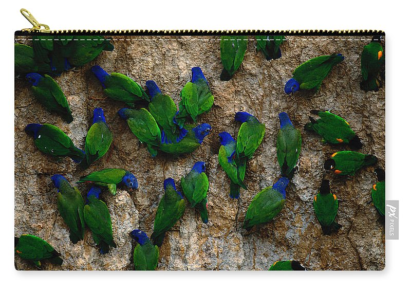 Blue Headed Parrot Carry-all Pouch featuring the photograph Blue-headed And Barrabands Parrots by Art Wolfe