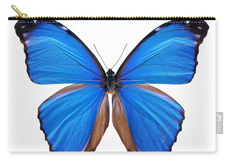 Amazon Rainforest Carry-all Pouch featuring the photograph Blue Morpho Butterfly - Large by Phototalk