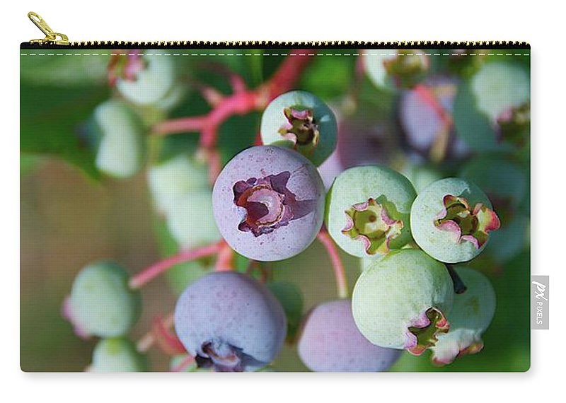 Large Group Of Objects Carry-all Pouch featuring the photograph Blueberries by ©howd, Howard Lau
