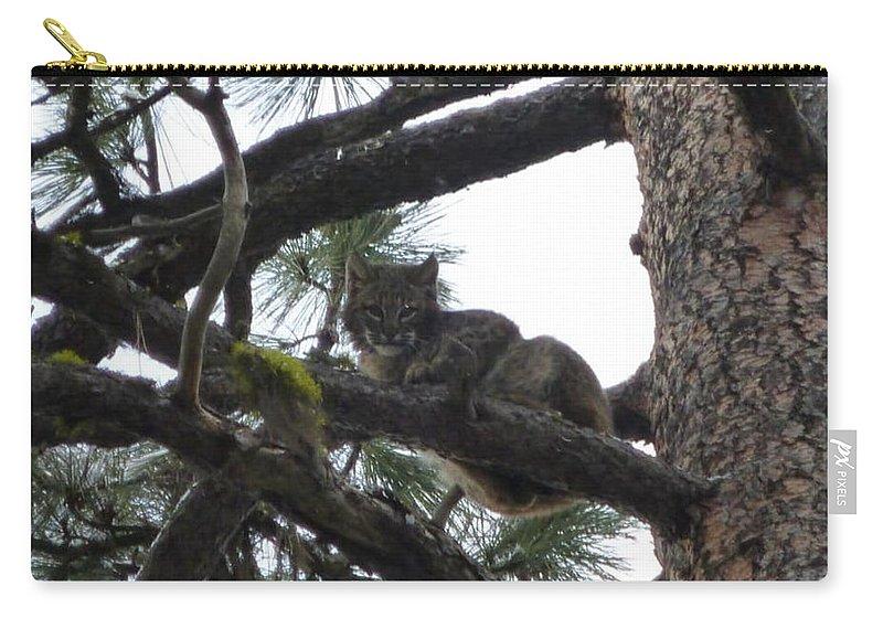 Bobcat Carry-all Pouch featuring the photograph Bobcat Cat Bob In A Tree by Garrett Butler