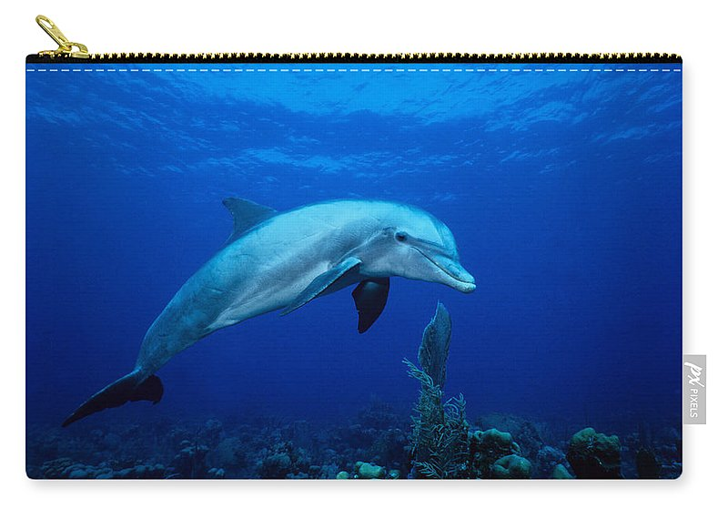 Underwater Carry-all Pouch featuring the photograph Bottlenose Dolphin,tursiops by Gerard Soury