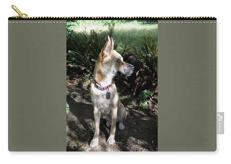 Carry-all Pouch featuring the photograph Bowie by PDX Dogsitter
