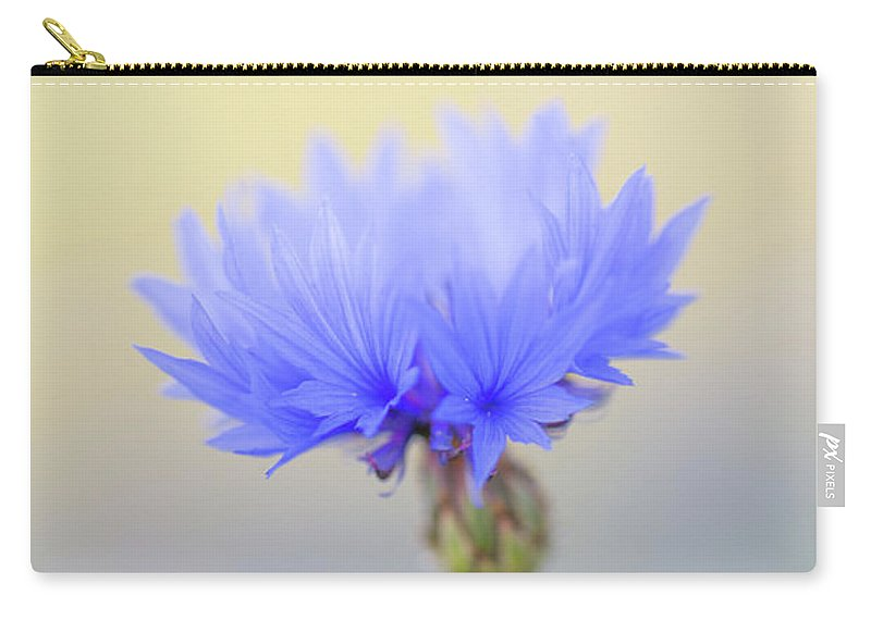 Flower Carry-all Pouch featuring the photograph Bright Blue Cornflower by Anita Nicholson