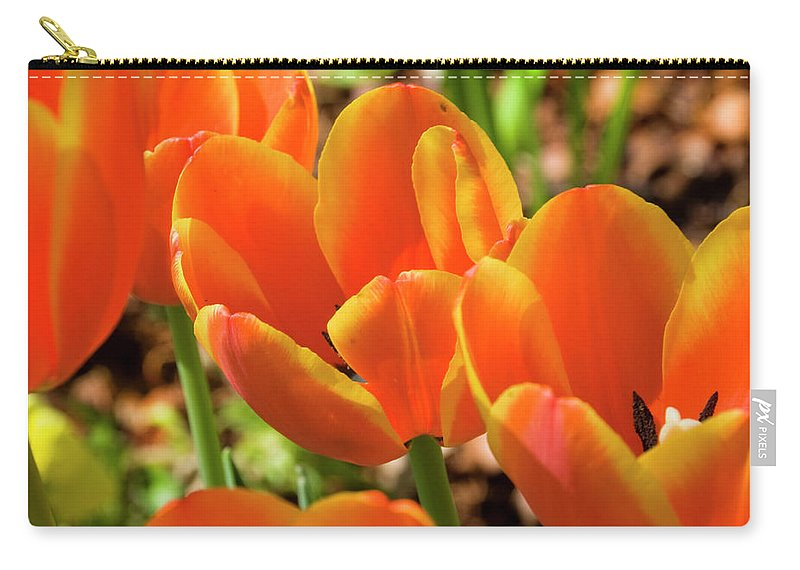 Flowerbed Carry-all Pouch featuring the photograph Bright Orange Tulips by Earleliason