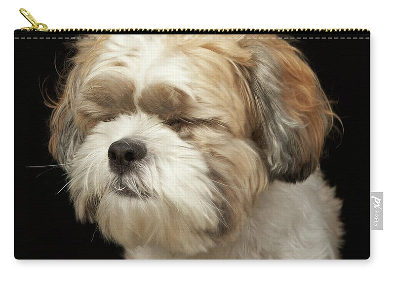 Pets Carry-all Pouch featuring the photograph Brown And White Shih Tzu With Eyes by M Photo