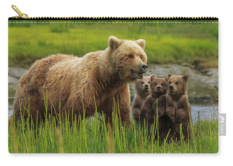 Brown Bear Carry-all Pouch featuring the photograph Brown Bear Sow And Cubs, In The Long by Mint Images - Art Wolfe