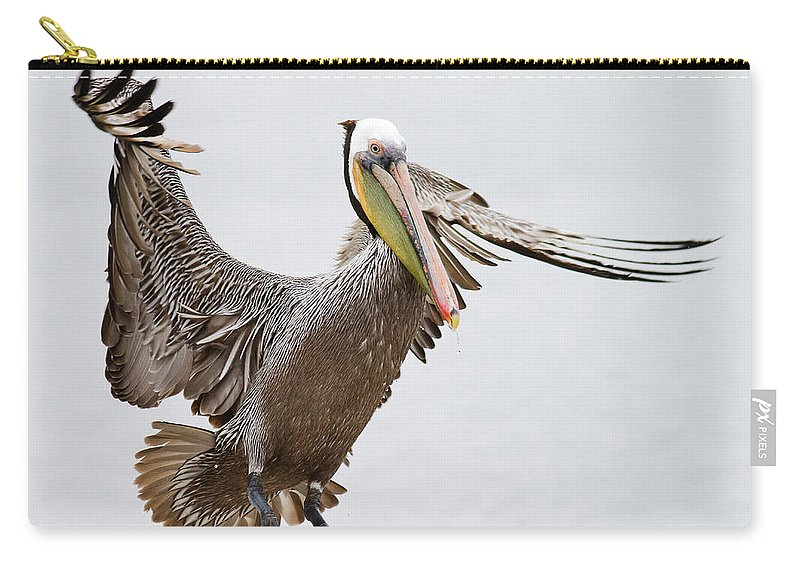 Oakland Carry-all Pouch featuring the photograph Brown Pelican by By Davor Desancic