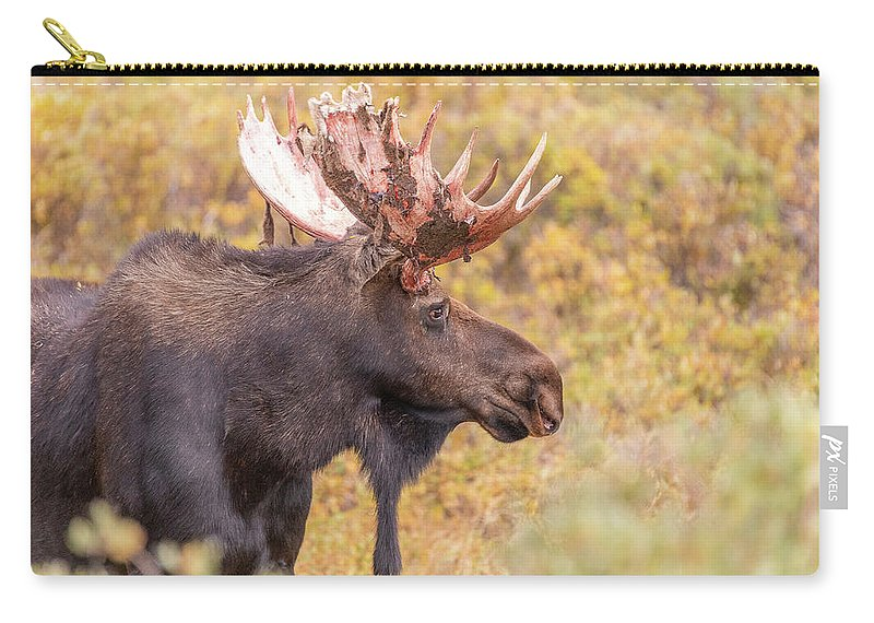 Moose Carry-all Pouch featuring the photograph Bull Moose In Fall Colors by Tony Hake