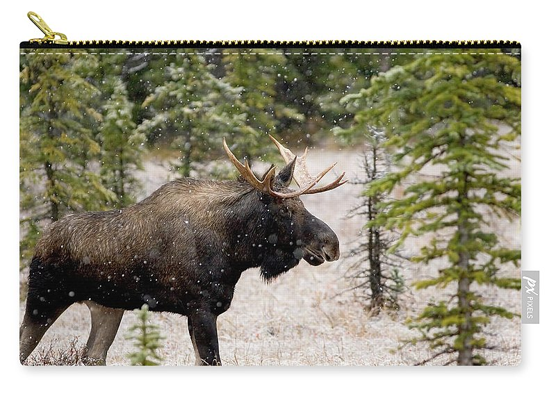 Horned Carry-all Pouch featuring the photograph Bull Moose In Snow Fall by Tulissidesign