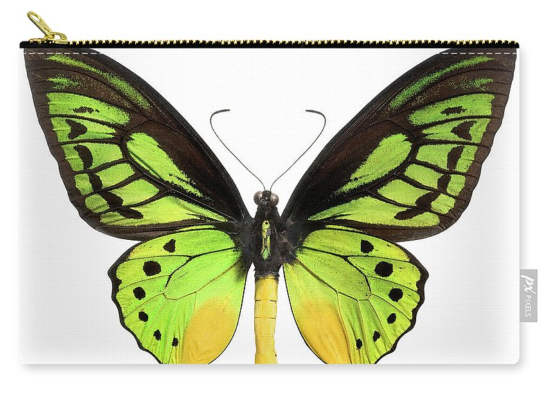 White Background Carry-all Pouch featuring the photograph Butterfly Lepidoptera With Green, Black by Flamingpumpkin