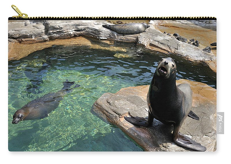 Sea Lion Carry-all Pouch featuring the photograph California Sea Lion And Spotted Seal by T. Nakamura Volvox Inc.