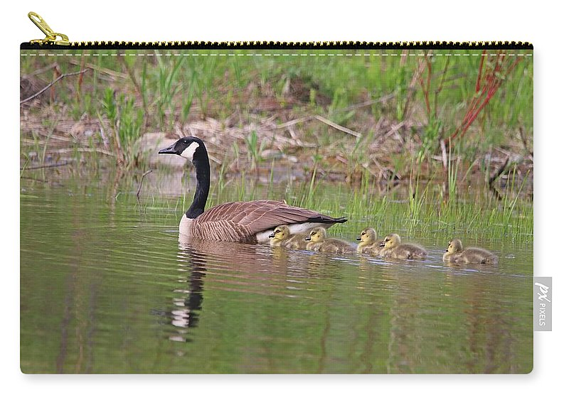 Canada Goose Carry-all Pouch featuring the photograph Canada Goose And Goslings by Marlin and Laura Hum