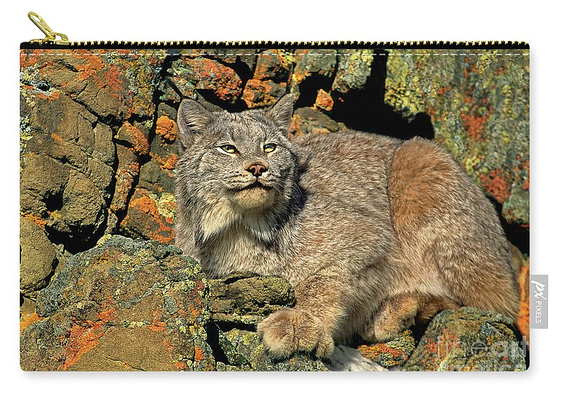 Canadian Lynx Carry-all Pouch featuring the photograph Canadian Lynx On Lichen-covered Cliff Endangered Species by Dave Welling