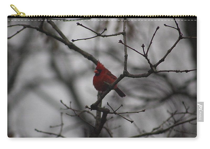 Carry-all Pouch featuring the photograph Cardinal On The Limb by Pics by Jody Adams