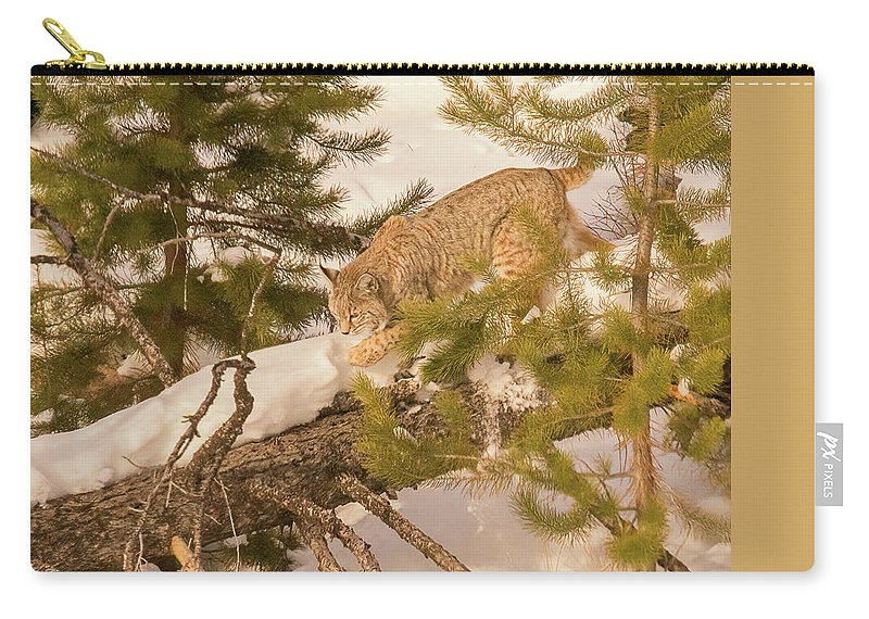 Cat Walk Carry-all Pouch featuring the photograph Cat Walk by Priscilla Burgers