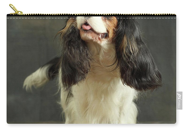 Pets Carry-all Pouch featuring the photograph Cavalier King Charles Spaniel by Sergey Ryumin
