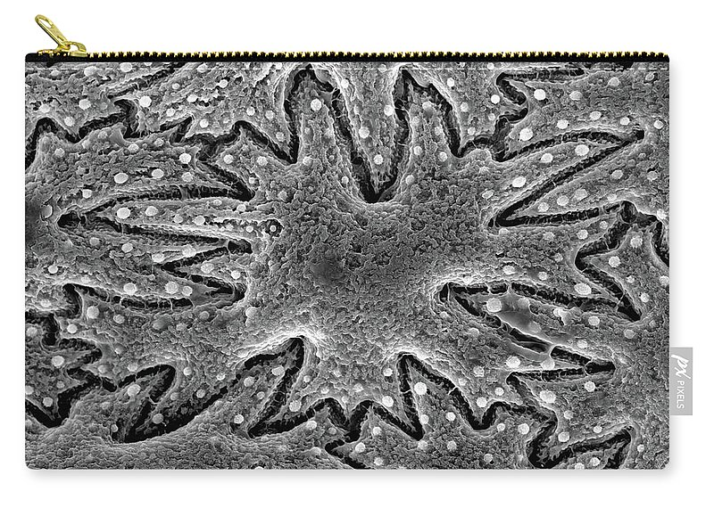 Microscope Carry-all Pouch featuring the photograph Celery Seed, Sem by Sheri Neva