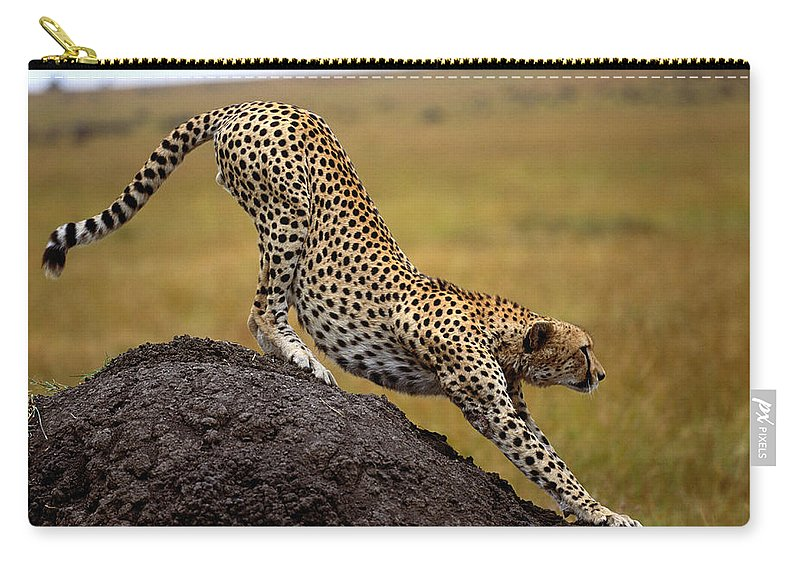 Kenya Carry-all Pouch featuring the photograph Cheetah Acinonyx Jubatus Stretching On by Art Wolfe
