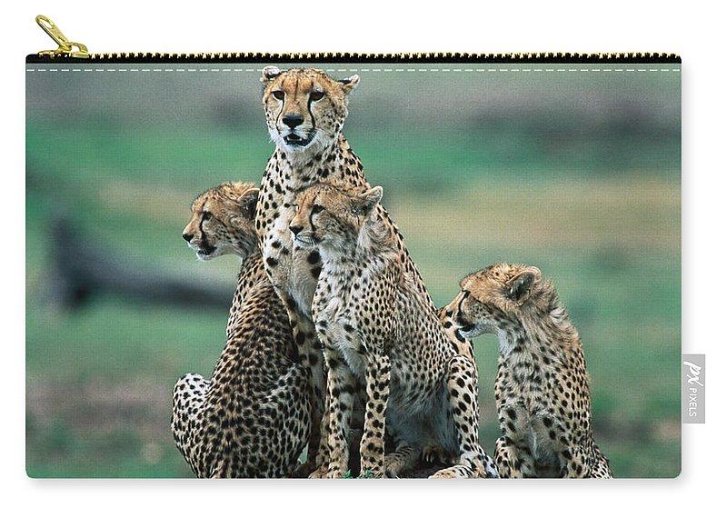 Kenya Carry-all Pouch featuring the photograph Cheetahs Acinonyx Jubatus., Masai Mara by Mark Newman