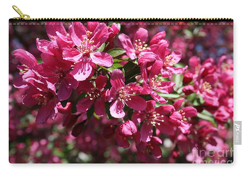 Highland Productions Llc  Darren Dwayne Frazier  Cherry Blossoms Cherry Petals Green Leaves  St. Louis Carry-all Pouch featuring the photograph Cherry Blossoms 2019 IIi by Darren Dwayne Frazier