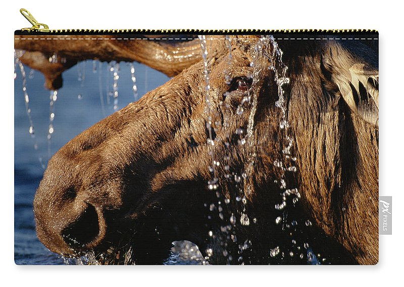 Male Animal Carry-all Pouch featuring the photograph Close-up Of Bull Moose Alces Alces With by Eastcott Momatiuk