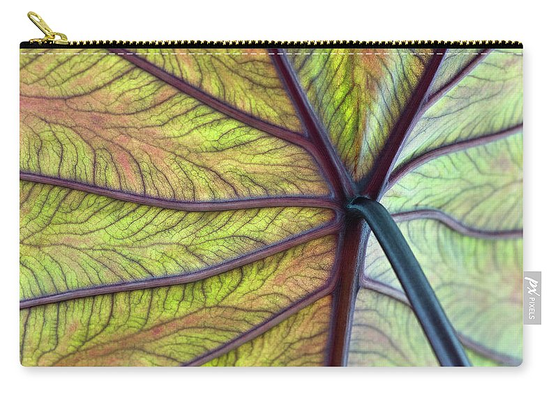Voodoo Doll Carry-all Pouch featuring the photograph Close Up Of Colocasia Esculenta Leaf by Deb Casso