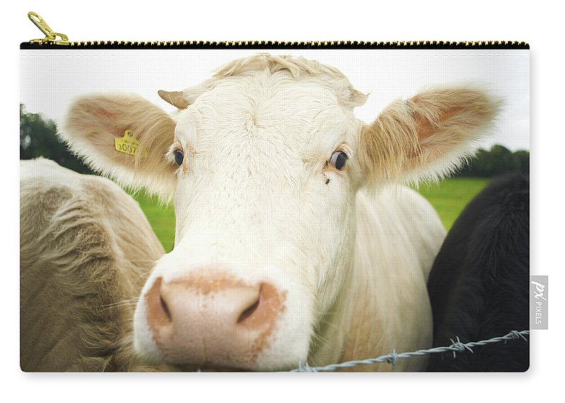 Free Range Carry-all Pouch featuring the photograph Close Up Of Cows Face by Peter Muller