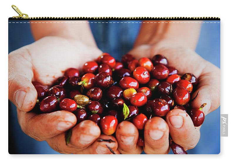 Mature Adult Carry-all Pouch featuring the photograph Close Up Of Hands Holding Coffee Beans by Pixelchrome Inc