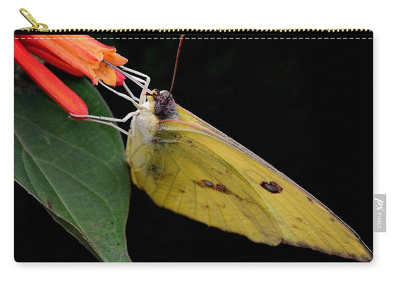 Butterfly Carry-all Pouch featuring the photograph Clouded Sulfur by Charlotte Schafer