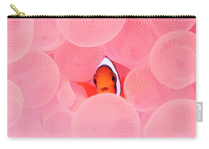 Underwater Carry-all Pouch featuring the photograph Clownfish In Corals by Yusuke Okada/a.collectionrf