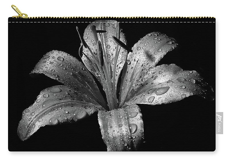 Black Background Carry-all Pouch featuring the photograph Collection by Photograph By Ryan Brady-toomey