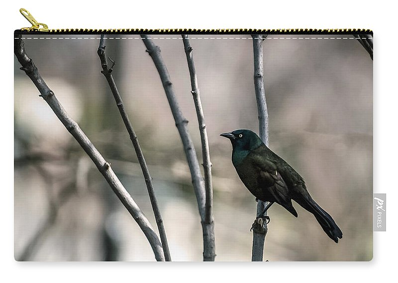 Animal Themes Carry-all Pouch featuring the photograph Common Grackle by By Ken Ilio