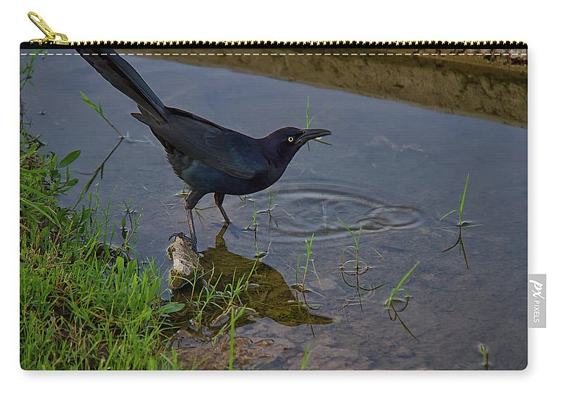 Common Grackle Carry-all Pouch featuring the photograph Common Grackle by Debby Richards
